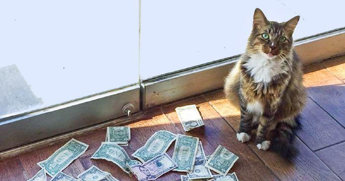 a sok pénzt kereső macska)